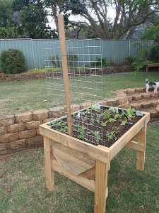 Raised vegetable garden box made from pallets